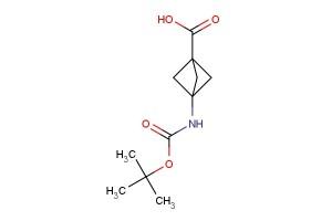 3-((tert-butoxycarbonyl)amino)bicyclo[1.1.1]pentane-1-carboxylic acid